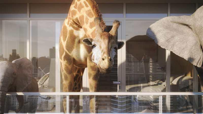 giraffe_ending_dbox